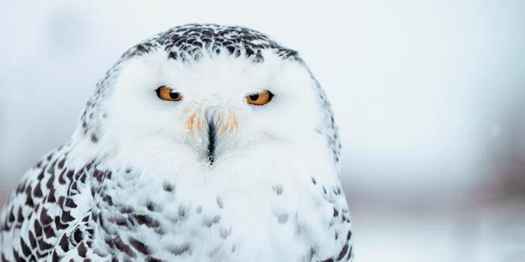 Дикий взгляд: Фотовыставка «Природа смотрит на тебя» откроется в Петербурге