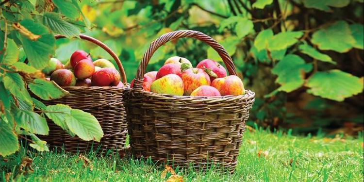 Яблочный спас в Петербурге