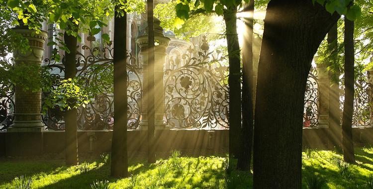 Древо жизни в Михайловском саду