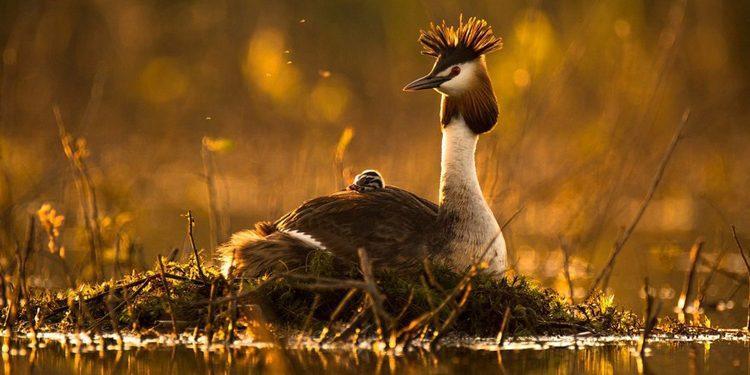 «Дикая природа России», фотоконкурс