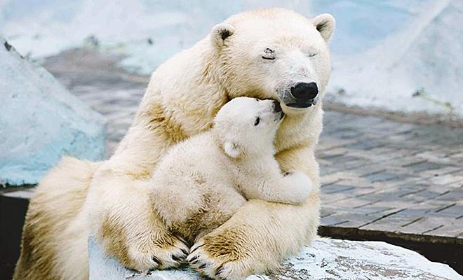 Белые медведи верят в светлое будущее
