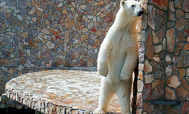 Медвежья фотосессия в зоопарке Петербурга: Хаарчаана – знаменитая модель