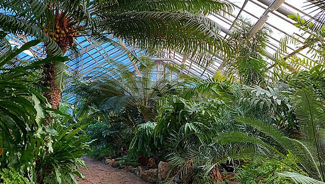 В оранжереях красиво и тепло. Ботанический сад